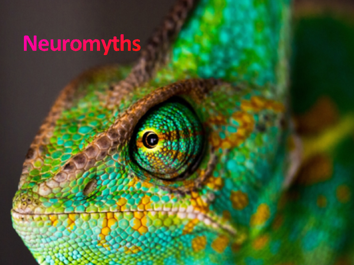 neuromyths from Sorrel Roberts